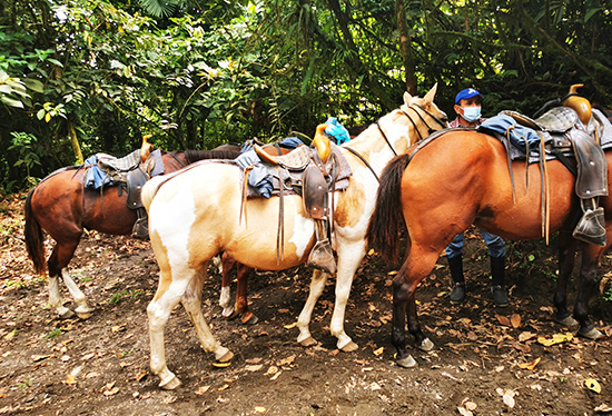 horseback riding tours arenal fortuna